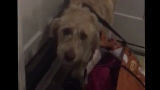 Puppy with head stuck in grocery bag melts owner's heart - Video