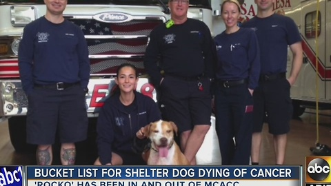 Mesa firefighters help dying dog live out bucket list
