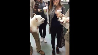 Puppies have the cutest conversation ever! - Video