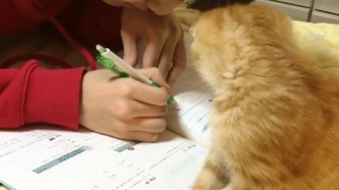 Cute kitten makes homework impossible to do