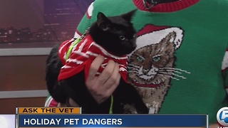 Keep your pet safe this holiday season - Video