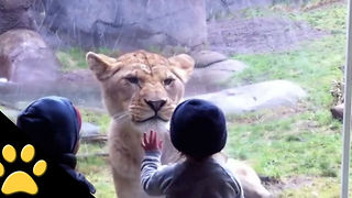Kids At The Zoo: Compilation - Video