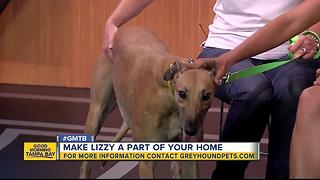 Rescues in Action: Make Lizzy part of your family