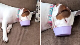 Dog literally falls asleep in her food bowl
