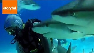 Divers Swim with Frenzy of Friendly Sharks - Video