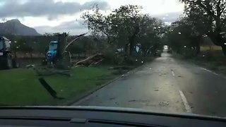 Trees Toppled During Fatal Cape Town Storm - Video