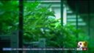 Ohio medical marijuana program on hold - Video