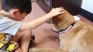 Little Boy Tearfully Says Goodbye To His Dog One Last Time - Video