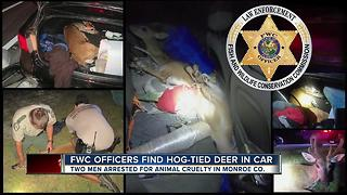 Men found with endangered Key deer tied up and stuffed in car's truck and back seat - Video