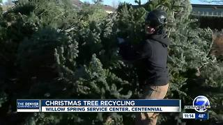 Christmas tree recycling - Video