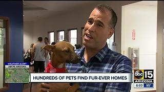 Successful adoption event at Maricopa County animal shelter - Video