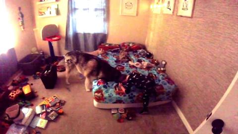 Dog's howling is little boy's morning alarm clock