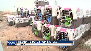 Humane societies in Milwaukee ready to help pets impacted by Harvey - Video