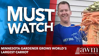 Minnesota gardener grows world's largest carrot - Video
