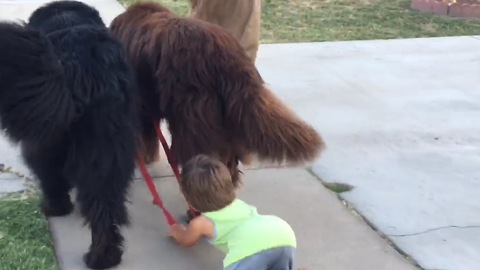 Toddler gets taught lesson on life from dogs
