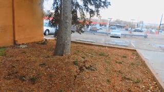 Tree Falls On Car During Windstorm - Video