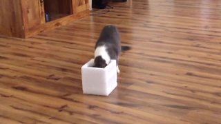 Cat Gets A Box Makeover - Video