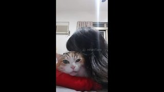 Bad-tempered cat meows to complain about being kissed by owner