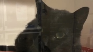 Courteous Cat Says 'Hello' To Everyone Who Visits Her - Video