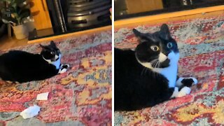 Cat is completely startled by visions of a dark future