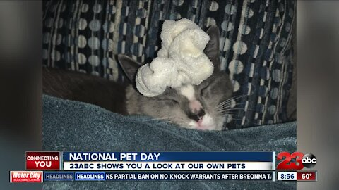 23ABC's pets on National Pet Day
