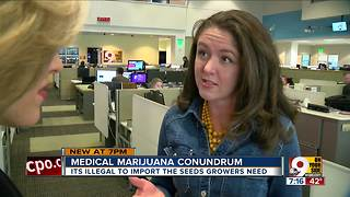 Medical marijuana conundrum - Video