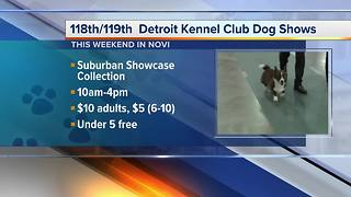 Detroit Kennel Club Dog Shows held in Novi - Video