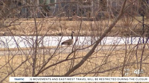 Wildlife management is critical to Johnson County airports