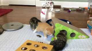 Adorable 6-Week-Old Kittens Play in Their Room - Video