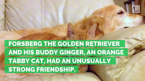 Dog Depressed after Family Cat Dies. Only 1 Thing Could Cure Him