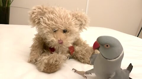 Parrot loves talking to his teddy bear best friend
