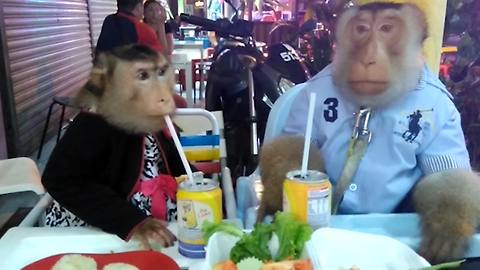 A Monkey Couple Dressed Like People Eat Dinner At A Restaurant