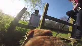 Dog Takes Us on a GoPro Adventure - Video