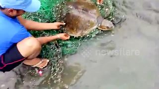 Locals rescue sea turtle caught in net - Video