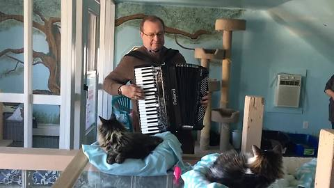 Man entertains shelter cats with accordion performance