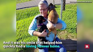 Shelter dog wins internet with smiling face | Rare Animals - Video