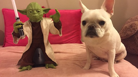 Master Yoda shows dog how to use the Force