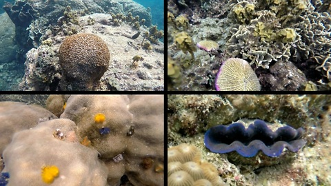 Underwater colourful worms, clam lips, fishes, corals, GoPro