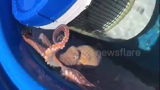Octopus splashes woman in Hawaii - Video