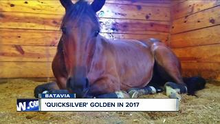 Golden horse - Video