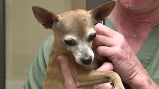 Las Vegas vets warning about potential dog flu outbreak - Video