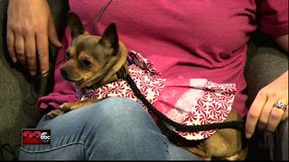 Meet our 23ABC Pet of the Week, Kiwi! - Video