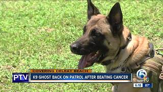 K9 Ghost back on patrol after beating cancer - Video