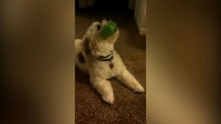 Squeaky Toy Symphony - Video