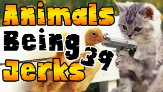 Animals Being Jerks #39 - Video