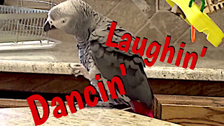 Parrot dances better than most people do! - Video