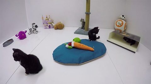 Cool Cat – Argos Play Continual Video Of Kittens On Website To De-Stress Black Friday Shoppers