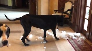 Great Dane returns to the scene of the crime