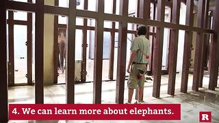 Why we keep elephants in the Zoo | Rare Animals - Video