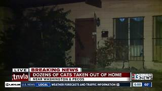 Over 30 cats removed from Las Vegas home after owner dies